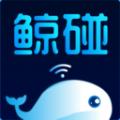 鲸碰安卓版 V1.0.0